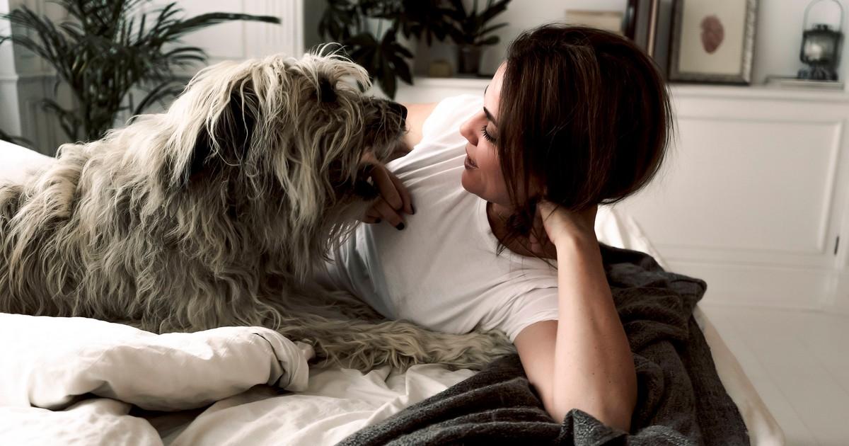 6 Anzeichen, dass dein Hund Schmerzen hat
