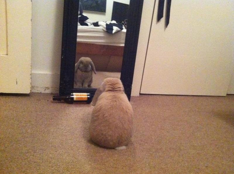 Das Tier sieht sich im Spiegel.