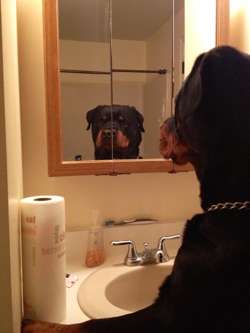 Der Hund ist fasziniert von seinem eigenen Spiegelbild.