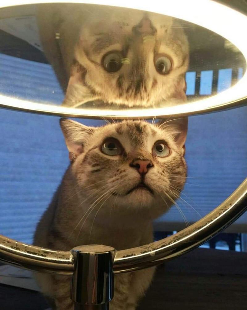 Die Katze beobachtet sich selbst im Spiegelbild.