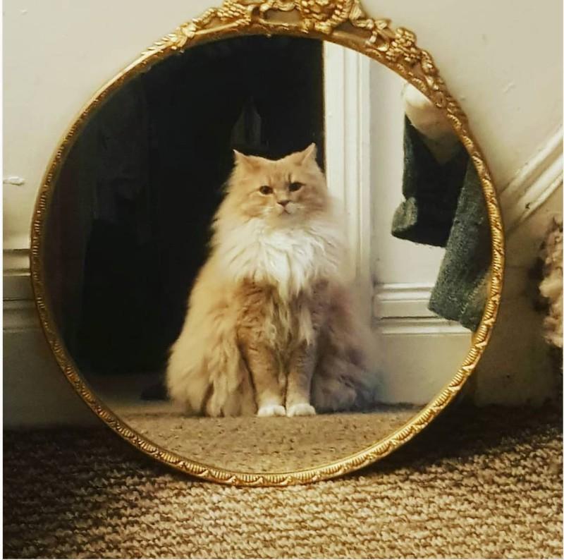 Die Katze ist sichtlich stolz auf das, was sie im Spiegel sieht.