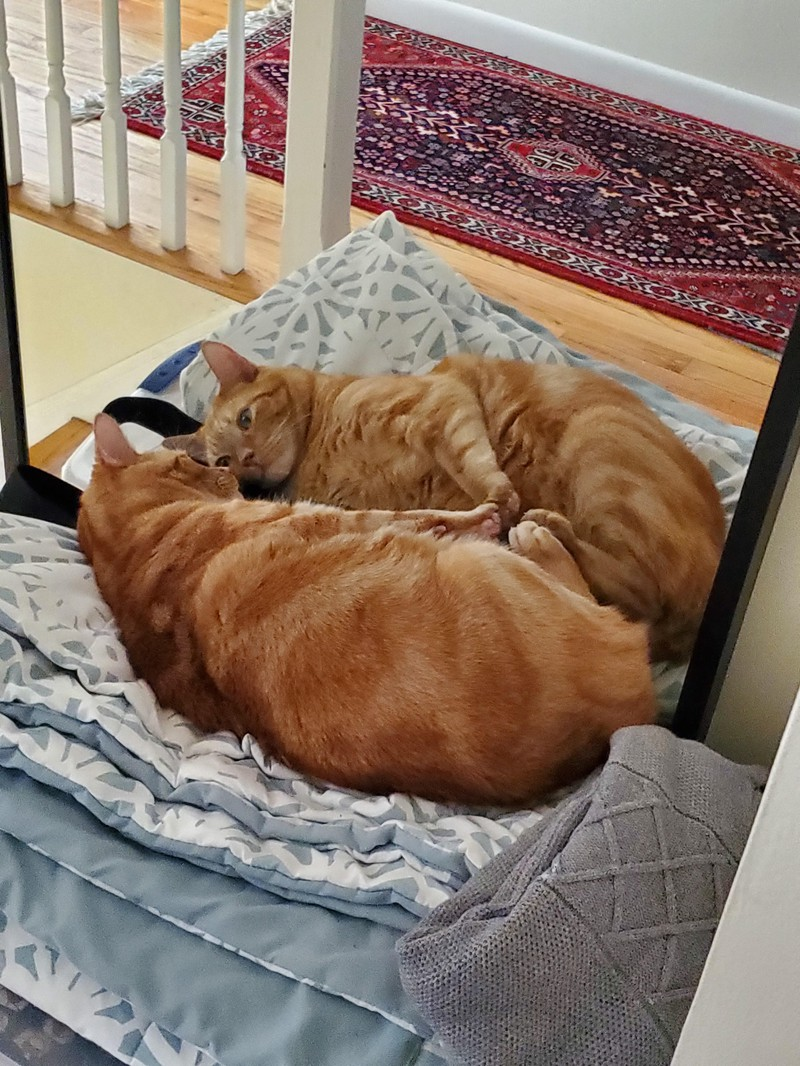 Die Katze ist verliebt in ihr eigenen Spiegelbild.