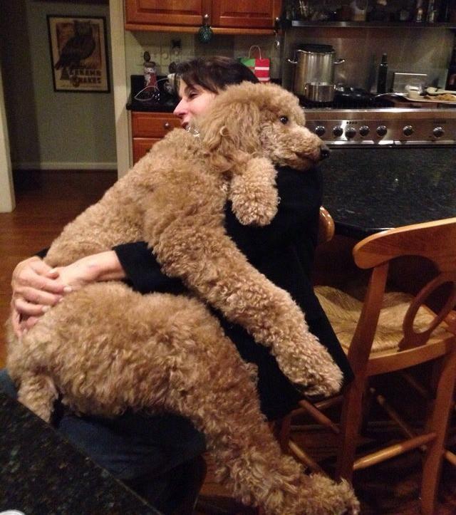 Der Hund verhält sich so, als wäre er ein kleiner Hund.