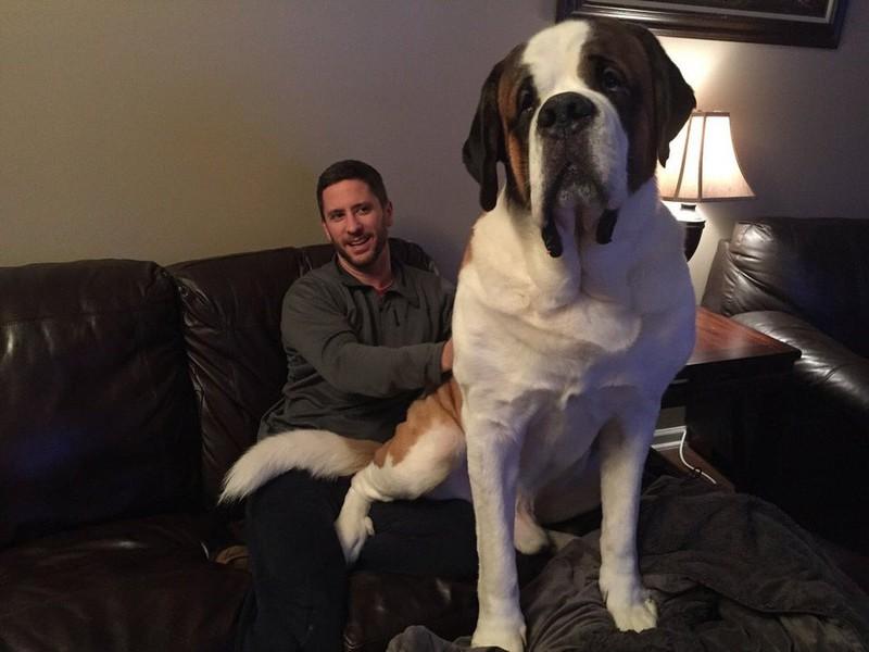 Ein Mann teilt uns stolz mit, dass er einen eigenen Schoßhund hat, der auch nur minimal zu groß ist.