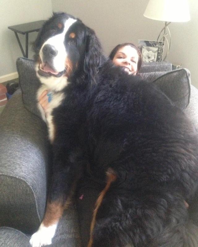 Eine Frau scheint große Hunde zu lieben, ihr Vierbeiner weiß nichts von seiner Größe.