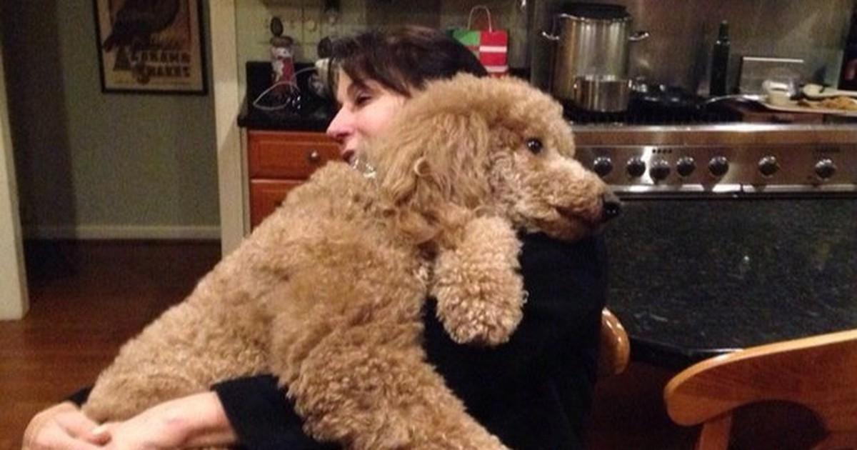 10 Hunde, die nicht wissen, wie groß sie sind