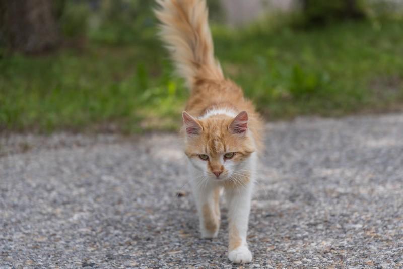 Der Katzenpapa hoffte jahrelang auf die Rückkehr seines vermissten Katers.