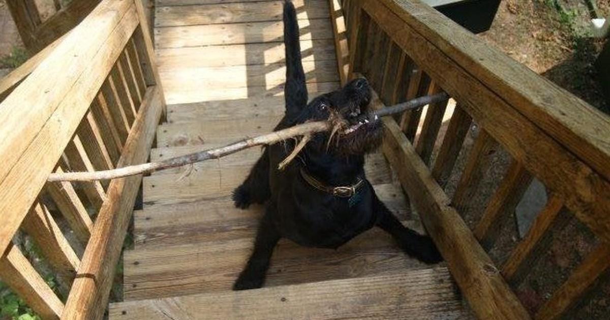 10 verpeilte Hunde, die sich in eine unangenehme Lage gebracht haben