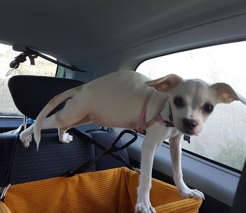Der Hund möchte nicht in seine Transportbox und bringt sich damit in eine gefährliche Lage.