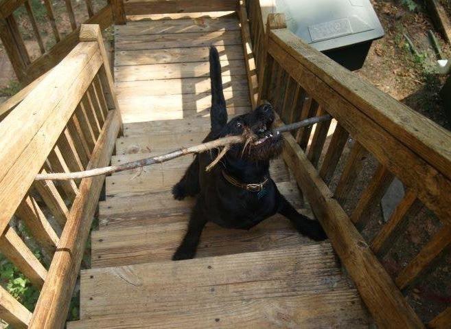 Hunde und ihre Stöckchen sind so eine Sache, manchmal sorgen sie dafür, dass Hunde in unangenehmen Situationen sind.