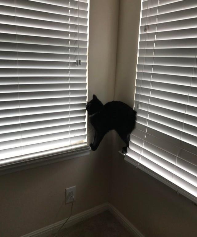 Die Katze steht auf zwei Fensterbrettern und belustigt uns mit der merkwürdigen Pose.
