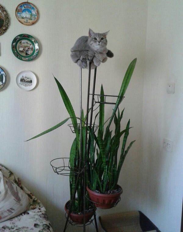Die Katze tarnt sich lustig als Pflanze.