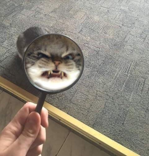 Die Katze zeigt ihre Zähne, während sie durch die Lupe schaut und bringt uns damit zum lachen.