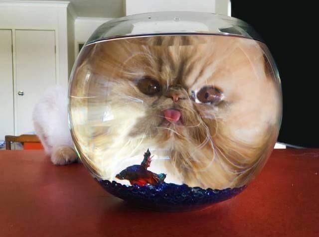 Katzen erheitern uns im Alltag.