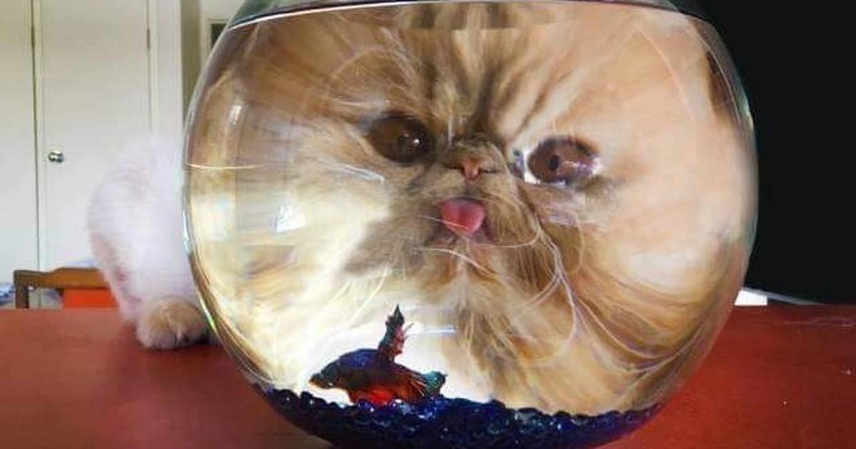10 lustige Aktionen von Katzen, die einen zum Schmunzeln bringen