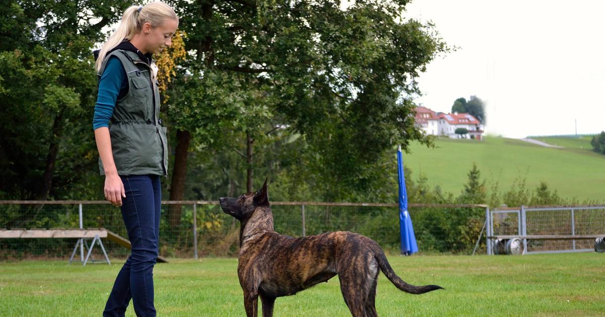 Hundeerziehung: 7 Tipps, damit dein Hund reagiert, wenn du ihn rufst