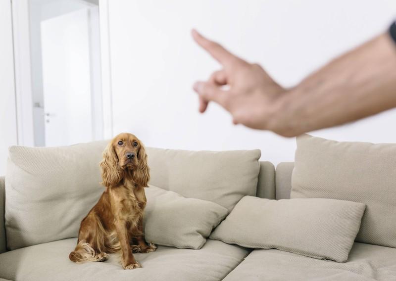 Dein Hund ist bereitwilliger auf dich zu hören, wenn du ihn nicht ausschimpfst.