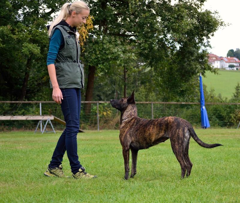 Tipps für die Hundeerziehung sind wichtig, damit der Hund auf Rufe reagiert.