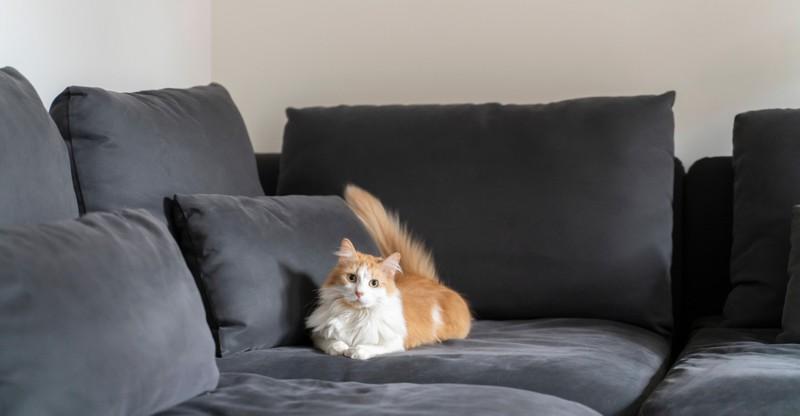 Katzen, die viel alleine sind, können einsam sein und sich deswegen öfters übergeben.