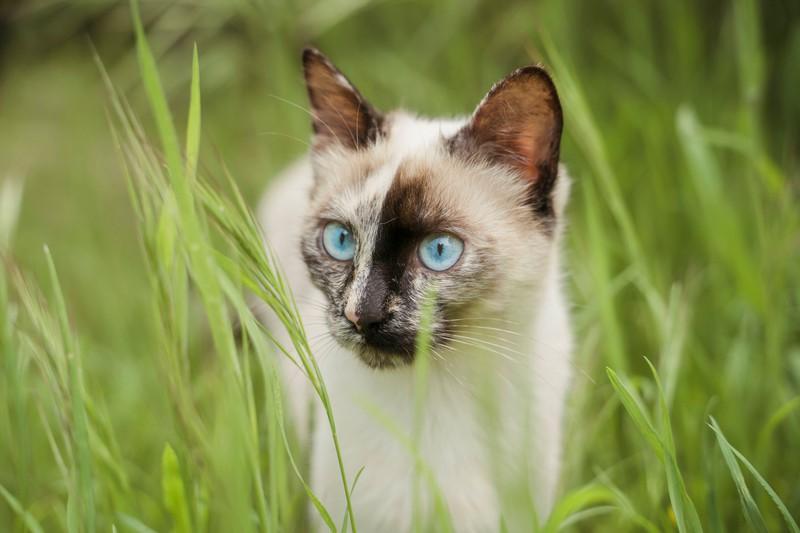 Katzen fressen häufig Gras, dass sie dann erbrechen.