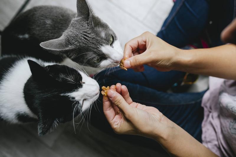 Nachdem die Katze erbrochen hat, darf sie 24 Stunden nichts fressen, und dann erstmal Schonkost.