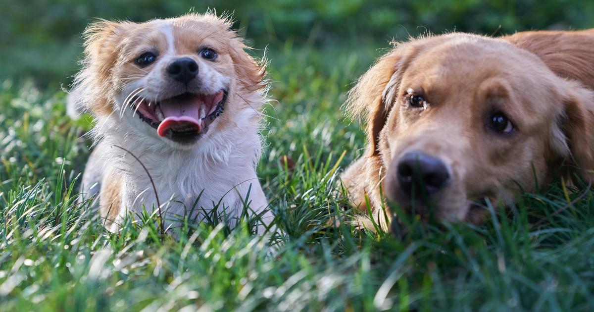 Süße Story: Hund und Schmetterlinge werden Freunde