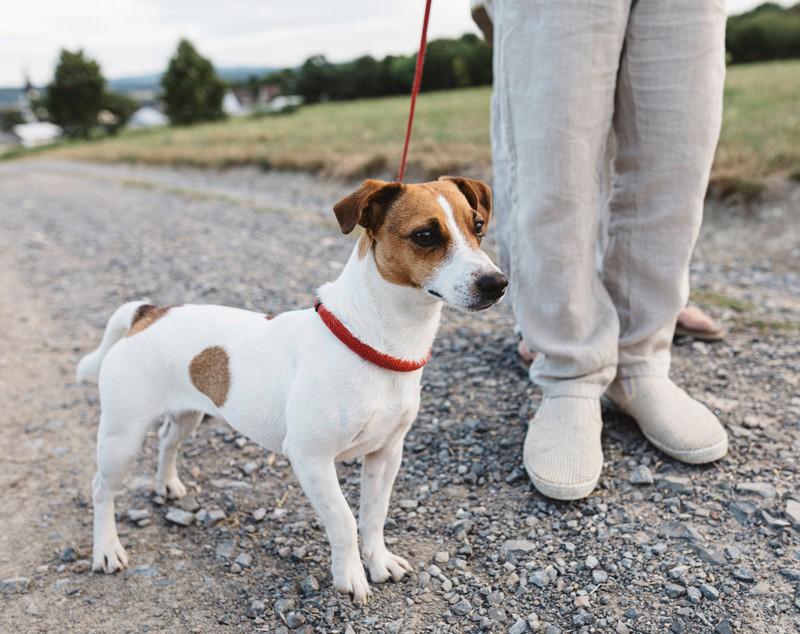 Wenn der Hund sein Geschäft macht, kann man erkennen, ob das Hundefutter ihm guttut.