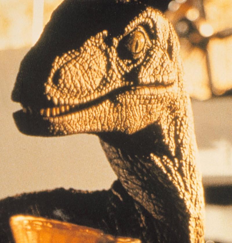 Das Kreischen der berühmten Velociraptoren aus Jurassic Park ist in Wirklichkeit das Geräusch, das Landschildkröten beim Verkehr machen