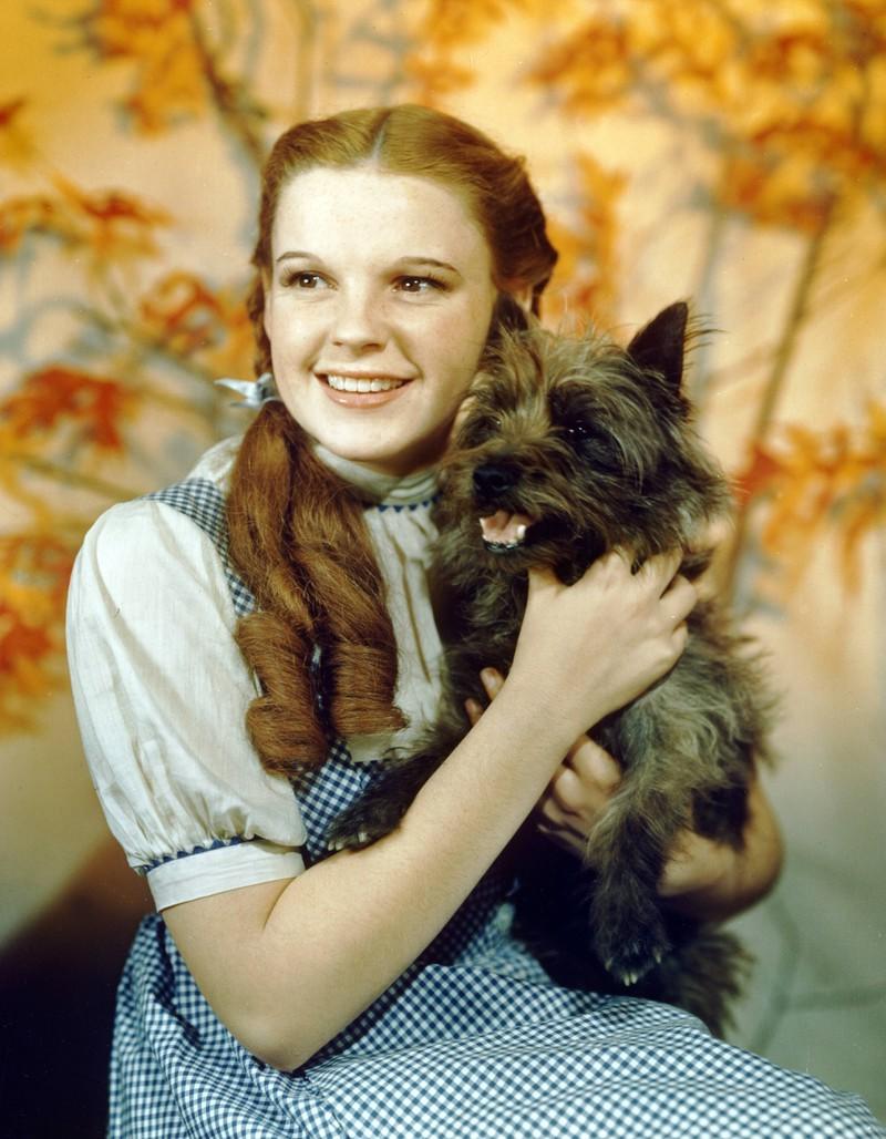 """In """"Der Zauberer von Oz"""" wurde Toto besser bezahlt, als die Darsteller der Munchkins."""