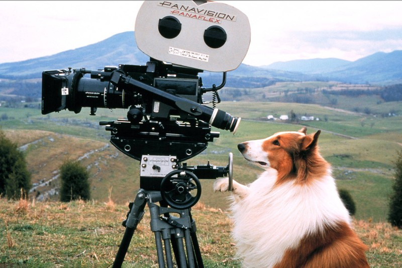 Lassie (1994) ist ein berühmter Tierfilm