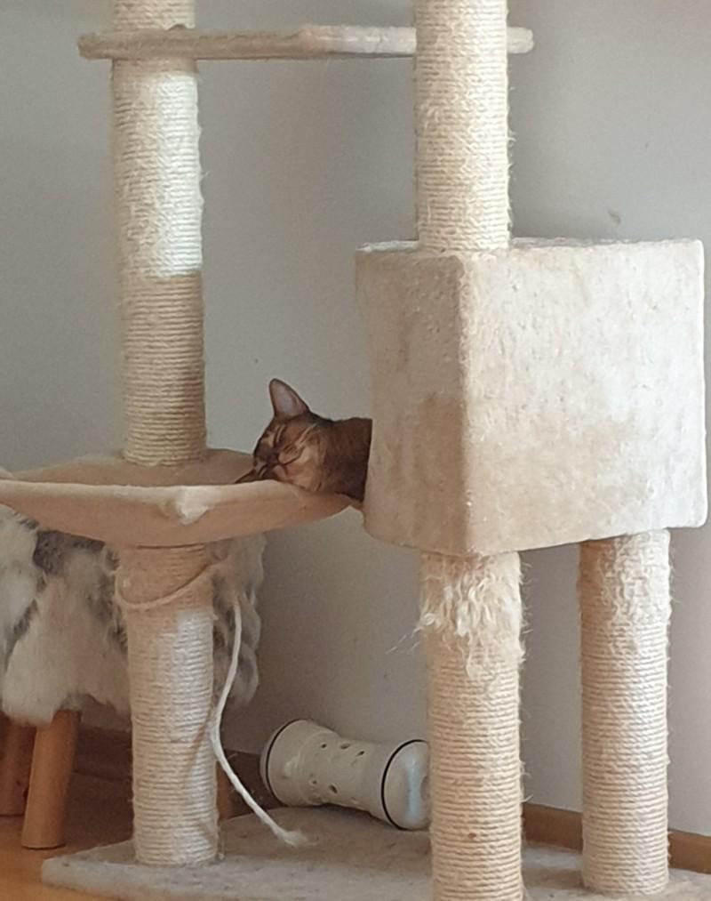 Die Katze hat sich eine stabile Schlafposition ausgesucht.