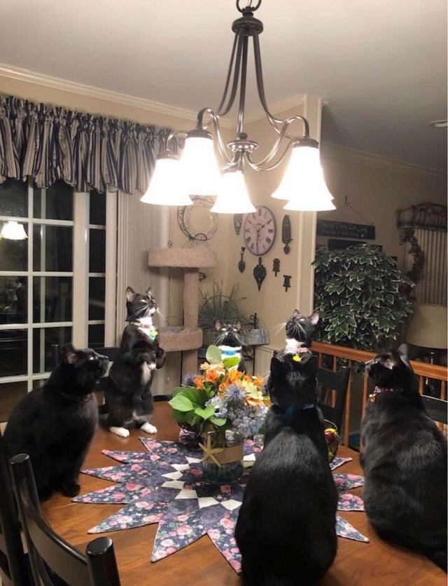Die komischen Katzen starren die Lampe an.