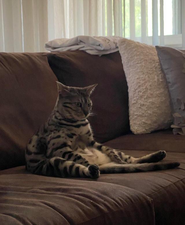 Eine Katze denkt über ihr Leben nach und sitzt dabei lustig.