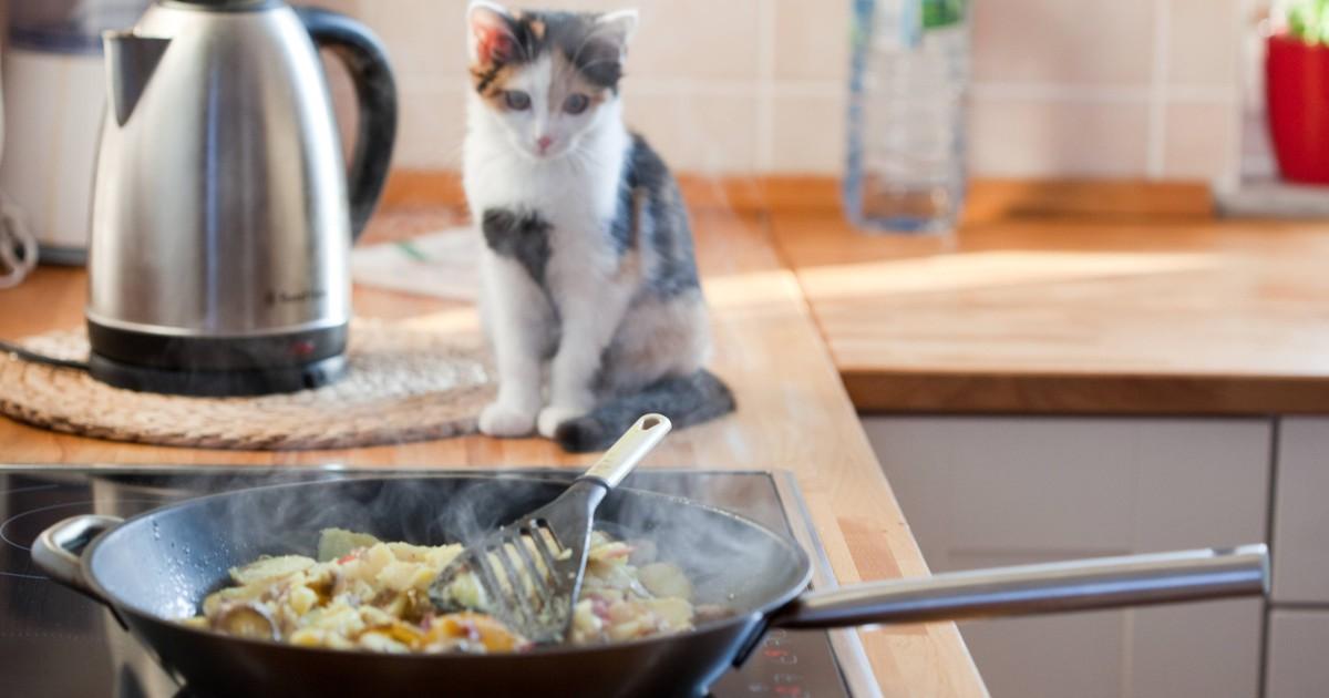 Gefahr: 10 Dinge, die in der Nähe deiner Katze nichts zu suchen haben