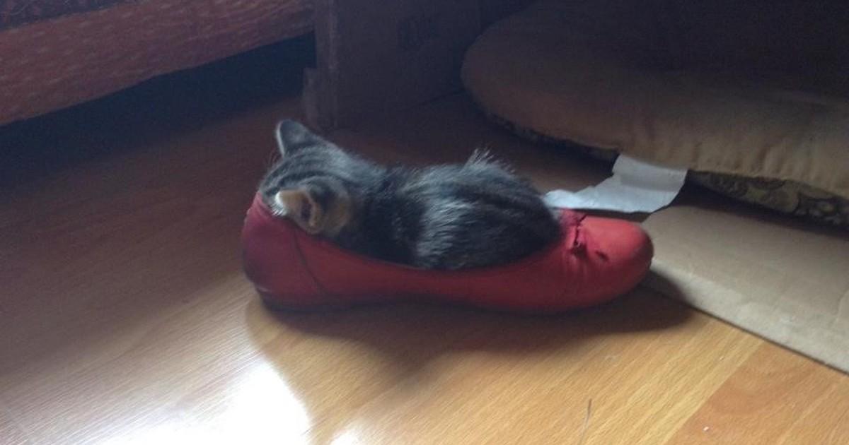 Was passt, das passt: 15 Katzen, die einfach überall reinpassen