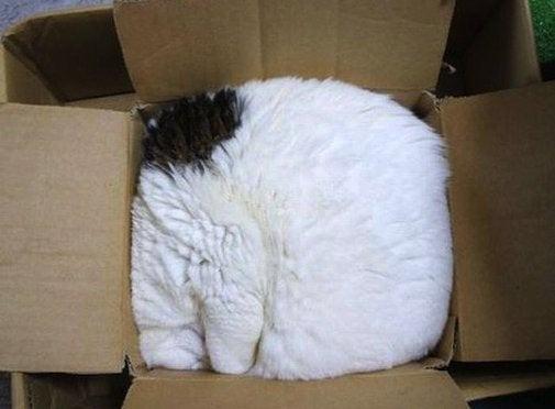 Bei dieser Katze erkennt man gar nicht, wo sie anfängt.