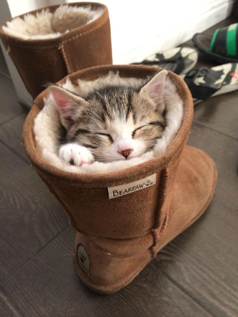 der kleine Stubentiger schläft in einem Stiefel.