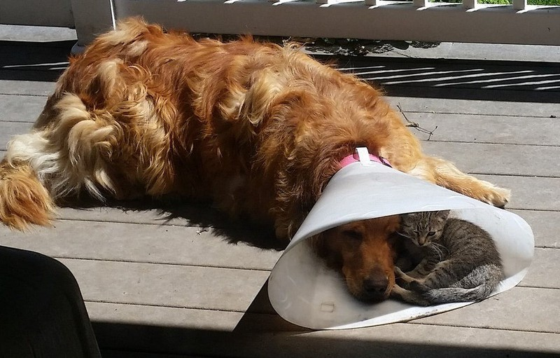 Die Katze nutzt den Schatten des Hundetrichters.
