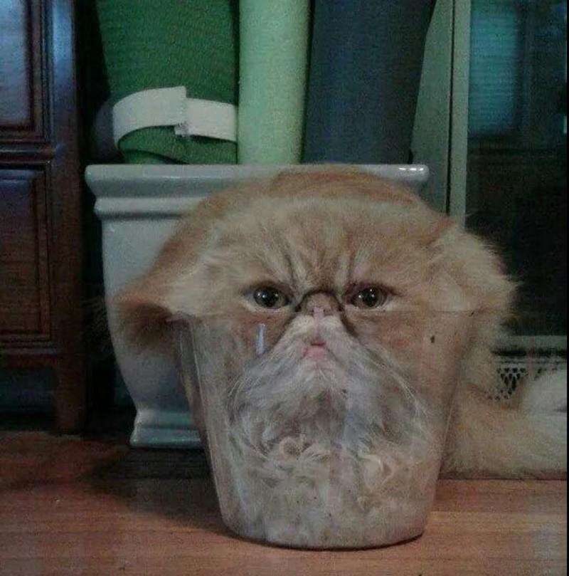 Diese Katze passt ziemlich genau in das Glas.