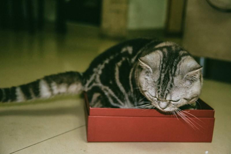 Katzen lieben es sich passend in Kisten zu setzen.