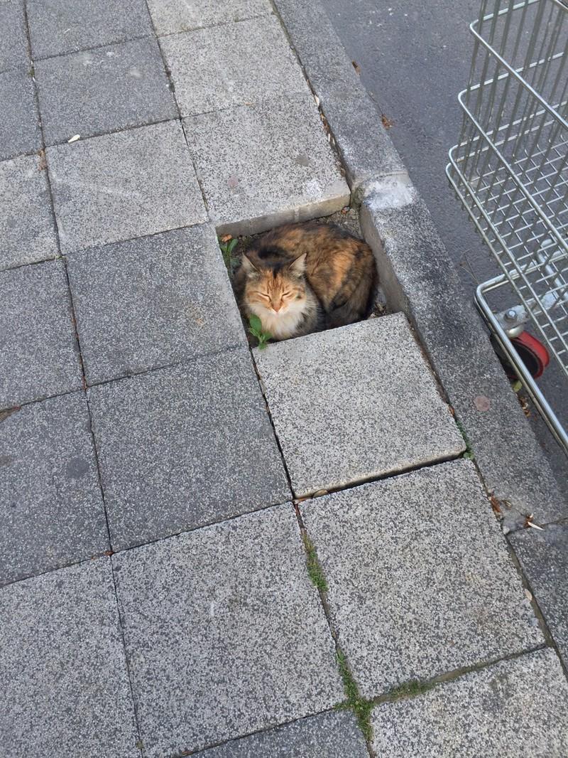 So eine fehlende Fliese ist für eine Katze wie eine Kiste.