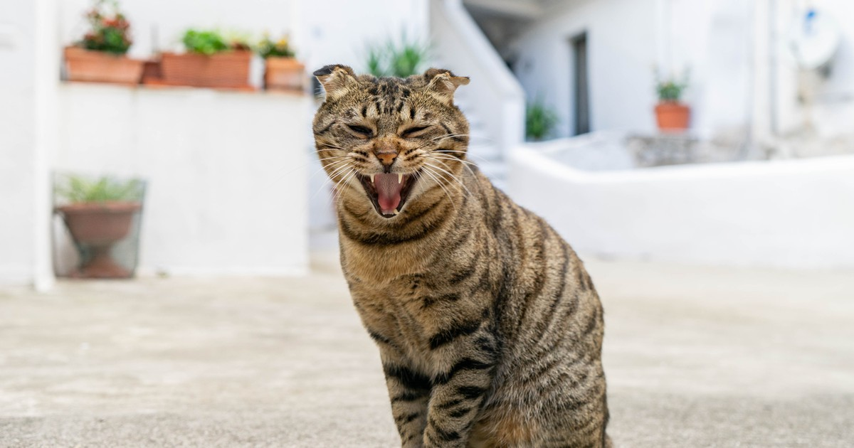 Persönlichkeit: Das sagt die Fellfarbe über deine Katze aus