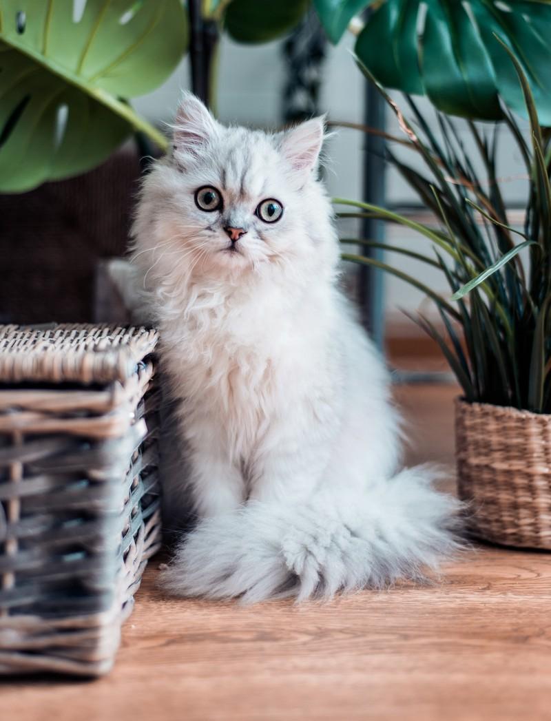 Eine Erkältung bei Katzen kann man verhindern.