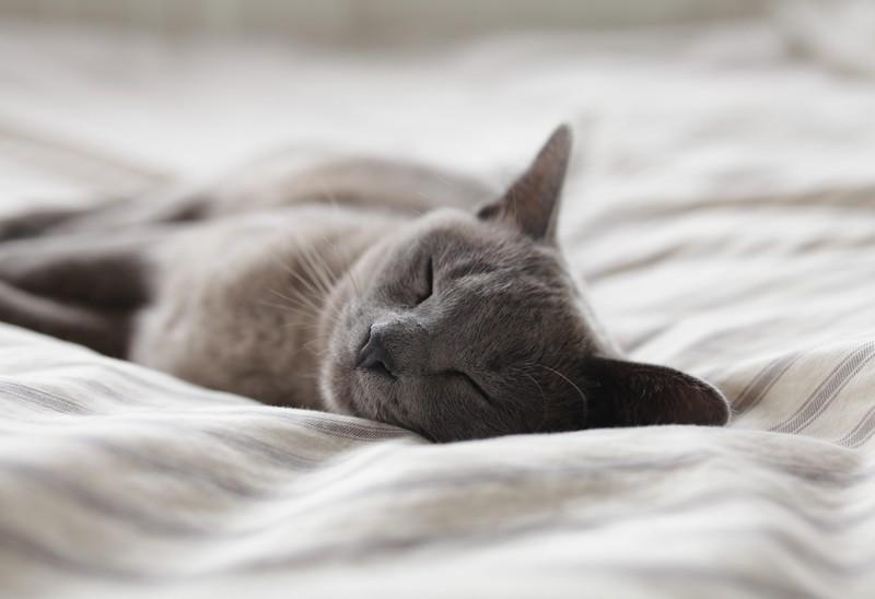 Wenn Katzen erkältet sind, schlafen sie viel.