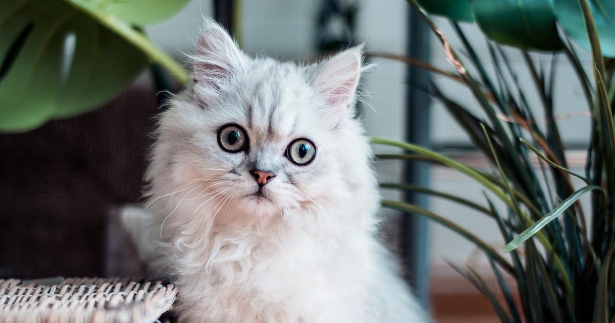 Erkältung bei Katzen: So kannst du es verhindern