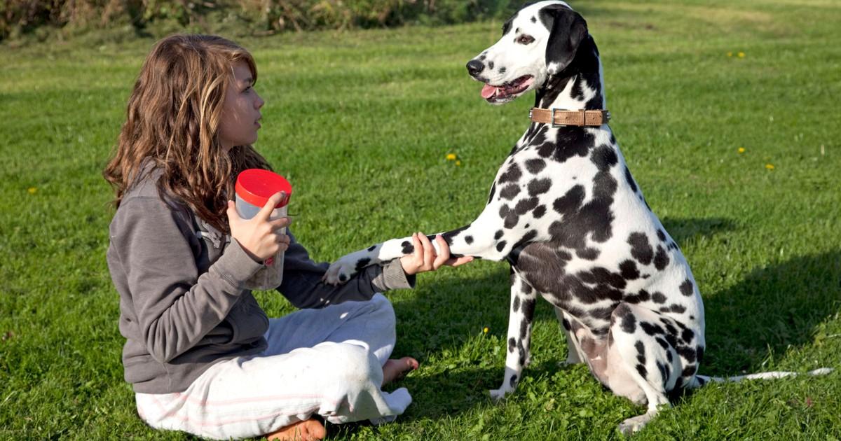Hundetricks: 5 seltene Tricks, die du deinem Hund beibringen kannst