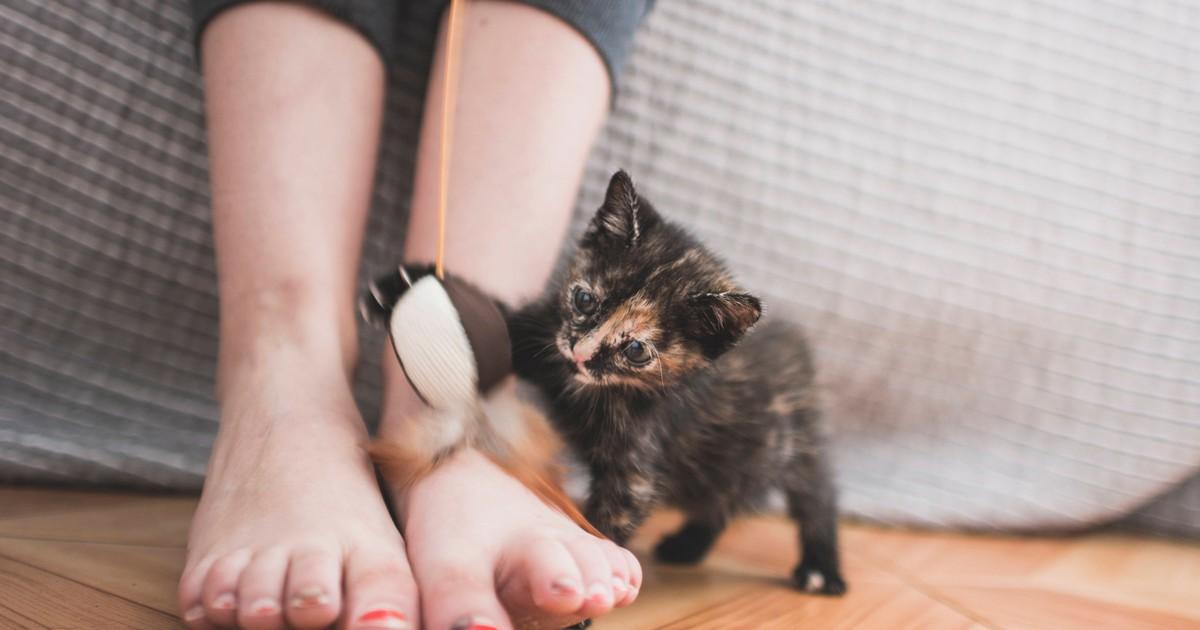 Warum greifen Katzen gerne Füße an?