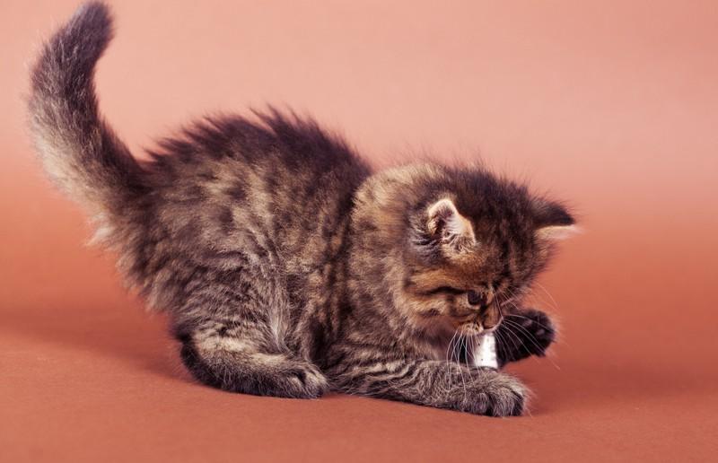 Die Katze folgt ihrem Jagdinstinkt
