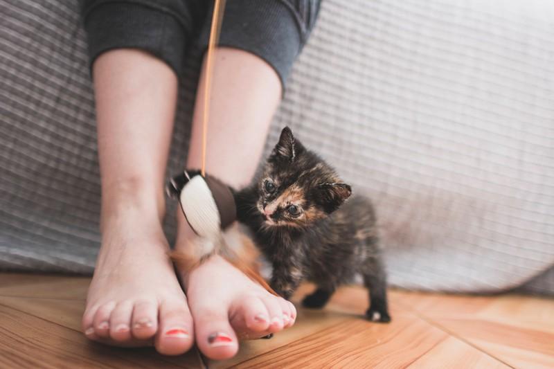 Katzen greifen manchmal die Füße von Menschen an.