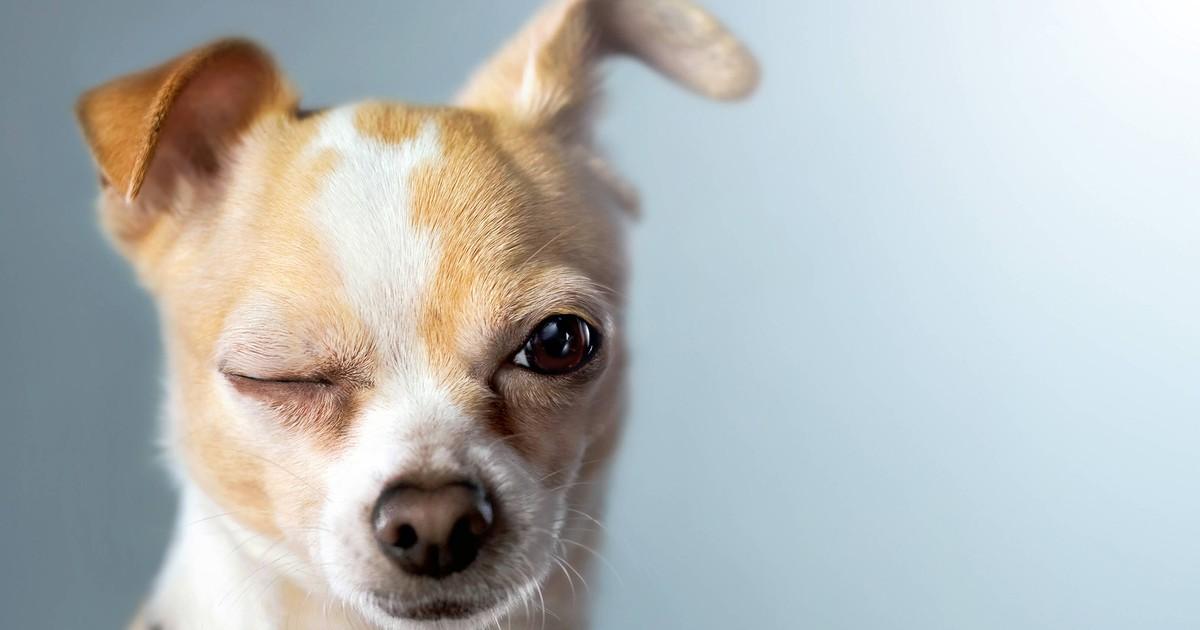 Warum zwinkern Hunde?